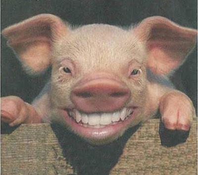 porcina